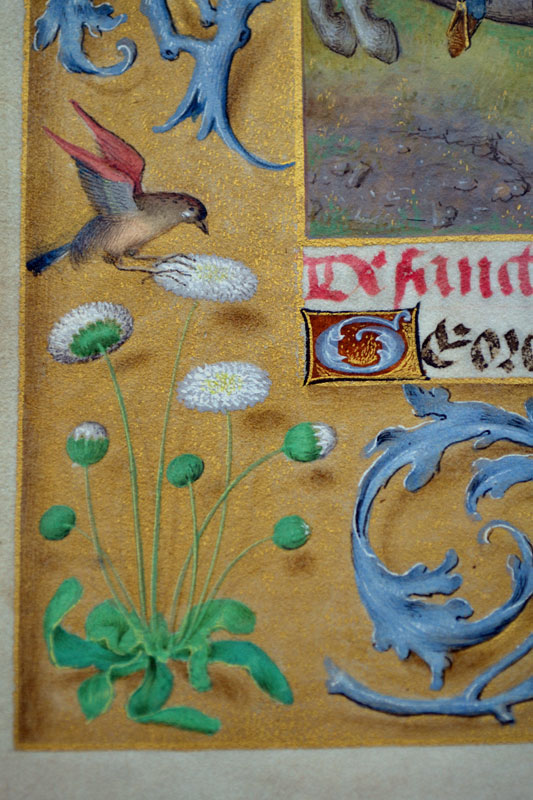 Unknown,  Donne Hours: detail of the border decoration,  ca. 1480,  Louvain-la-Neuve, Archives de l'Université
