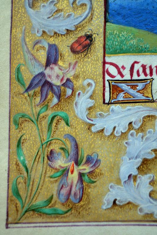 Unknown, Donne Hours: detail of the border decoration,  ca. 1480,  Louvain-la-Neuve, Archives de l'Université