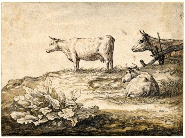 Albert Cuyp,  Three Cows on Grass with Dock Leaves in the Foreg, British Museum, London