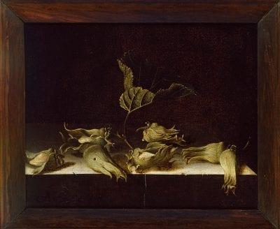 Adriaen Coorte, Still Life with Hazelnuts, 1696, Oxford, Ashmolean Museum