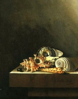 Adriaen Coorte,  Still Life with Shells, 1698, Private Collection
