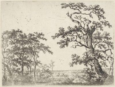 Adriaen Verboom (Rotterdam ca. 1628–ca. 1670 Amsterdam?),  Trees in a Bog,  ca. 1663,